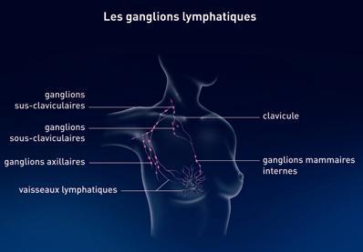 Les ganglions lymphatiques du sein